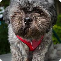 Adopt A Pet :: Fifille - Kirkland, QC