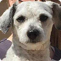 Adopt A Pet :: Mattie - Bloomington, IL