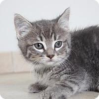 Adopt A Pet :: Cinderella C160331 - Edina, MN