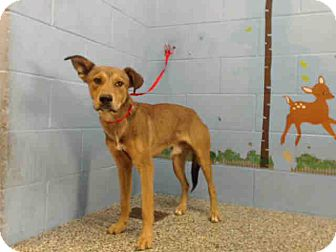 German Shepherd Dog Mix Dog for adoption in San Bernardino, California - URGENT on 10/21 SAN BERNARDINO