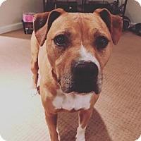 Adopt A Pet :: Nina - Seattle, WA