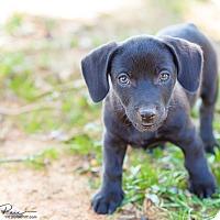 Adopt A Pet :: Stubs - Monroe, NC
