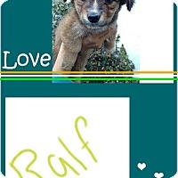 Adopt A Pet :: Ralfe - LAKEWOOD, CA