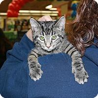 Adopt A Pet :: Ranger - Rochester, MN