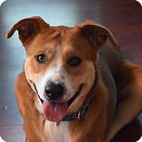 Adopt A Pet :: Pumpkin - Calgary, AB
