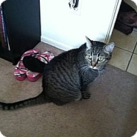 Adopt A Pet :: Hunter - Phoenix, AZ