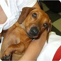 Adopt A Pet :: RedRover - Douglasville, GA
