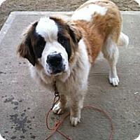 Adopt A Pet :: Pandora - Clayton, OH