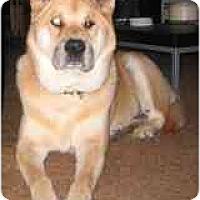 Adopt A Pet :: Gin - Marysville, CA