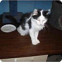 Adopt A Pet :: Lucky Lady - Hamburg, NY
