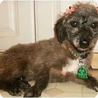 Adopt A Pet :: Tessa - Mooy, AL