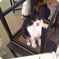 Adopt A Pet :: Benny - San Ramon, CA