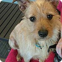 Adopt A Pet :: Isabella - Salem, OR