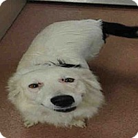 Adopt A Pet :: LARISSA - North Ogden, UT