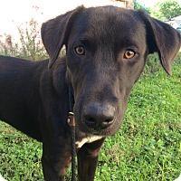 Adopt A Pet :: Stanley - San Antonio, TX