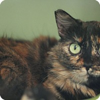Adopt A Pet :: Ariel - Canoga Park, CA