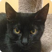 Adopt A Pet :: Austin - Winchester, CA
