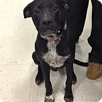 Adopt A Pet :: Mitchell In CT - Manchester, CT