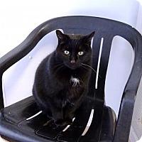 Adopt A Pet :: Bella B - Belleville, MI