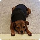 Adopt A Pet :: Tiff