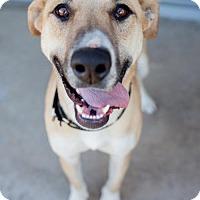 Adopt A Pet :: Bosu - San Diego, CA