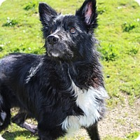Adopt A Pet :: Buddy - Grants Pass, OR
