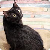 Adopt A Pet :: Peeka - Plymouth, MN