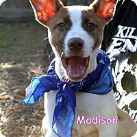 Adopt A Pet :: Madison - Groton, MA