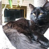 Adopt A Pet :: Kyra - St. Louis, MO