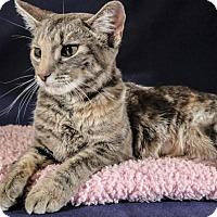 Adopt A Pet :: GaGa - Wayne, NJ