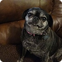 Adopt A Pet :: Penny 3 - Georgetown, KY
