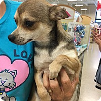 Adopt A Pet :: Captain - Hohenwald, TN
