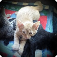 Adopt A Pet :: Ginger - Fairborn, OH