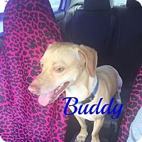 Adopt A Pet :: Buddy - Maitland, FL