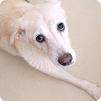 Adopt A Pet :: Macy - Sudbury, MA