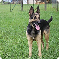 Adopt A Pet :: Vanna (bonded to Pat) - Greeneville, TN