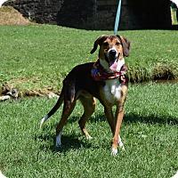 Adopt A Pet :: Tucker - Washington, PA