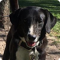Border Collie Mix Dog for adoption in Slidell, Louisiana - John
