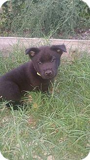 German Shepherd Dog/Labrador Retriever Mix Dog for adoption in McDonough, Georgia - CJ