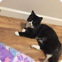 Adopt A Pet :: Gray - Wasilla, AK