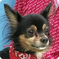 Adopt A Pet :: Leo - Evansville, IN