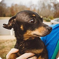 Adopt A Pet :: Valda - Bardonia, NY