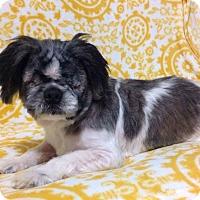 Adopt A Pet :: Toby - Aiken, SC
