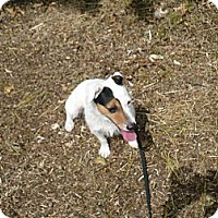 Adopt A Pet :: Jacey - Wisconsin Dells, WI
