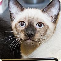 Adopt A Pet :: Clyde - Irvine, CA