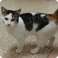 Adopt A Pet :: Zoey - Walnut, IA