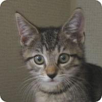 Adopt A Pet :: LUPA - Hamilton, NJ
