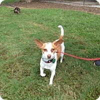 Adopt A Pet :: Perry - Greenville, SC