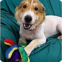 Adopt A Pet :: Clay - Mocksville, NC