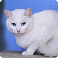 Adopt A Pet :: Accokeek - Chicago, IL